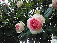 Dsc_4646